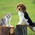perros-y-gatos-convivencia